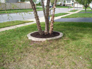 fronttreebed